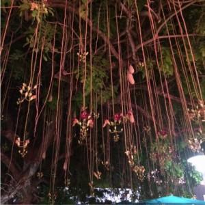 Blühender Baum in der Fußgängerzone der Lincoln Road, Miami Beach