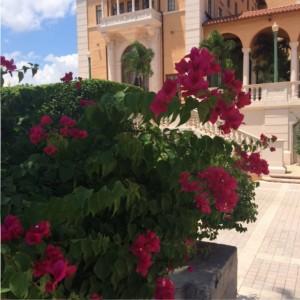 Blüten im Garten des Biltmore Hotel in Miami