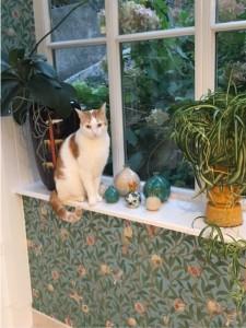 Unser Kater Ginger vor dem jüngsten Zuwachs meiner Granatapfelsammlung.